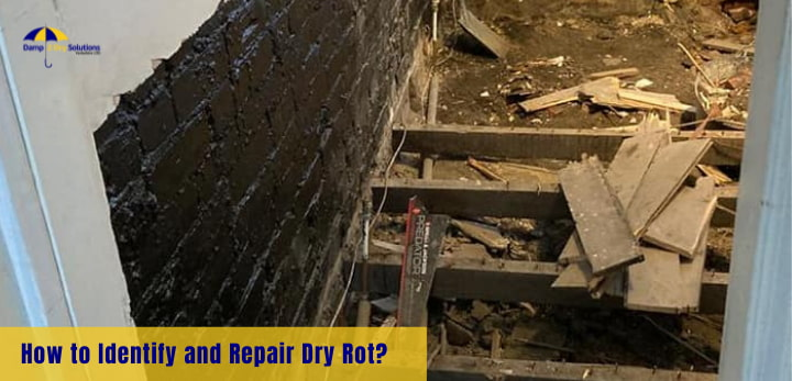 how to identify and repair dry rot