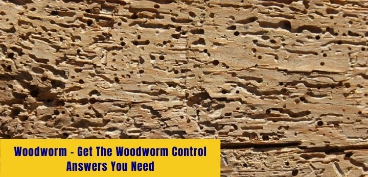 woodworm - get the woodworm control answers you need